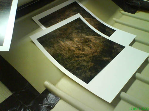 Printing Wiese X - the Print for the Special Limited Edition.  - All rights reserved. Copyright: Anne Schwalbe